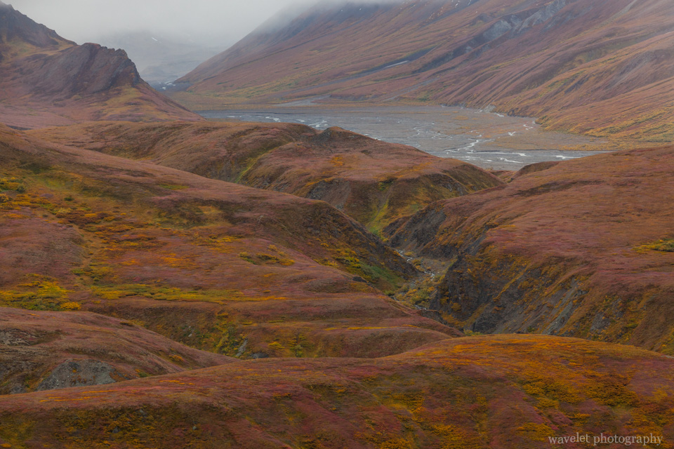 Near Eielson Visitor Center, Denali National Park, Alaska