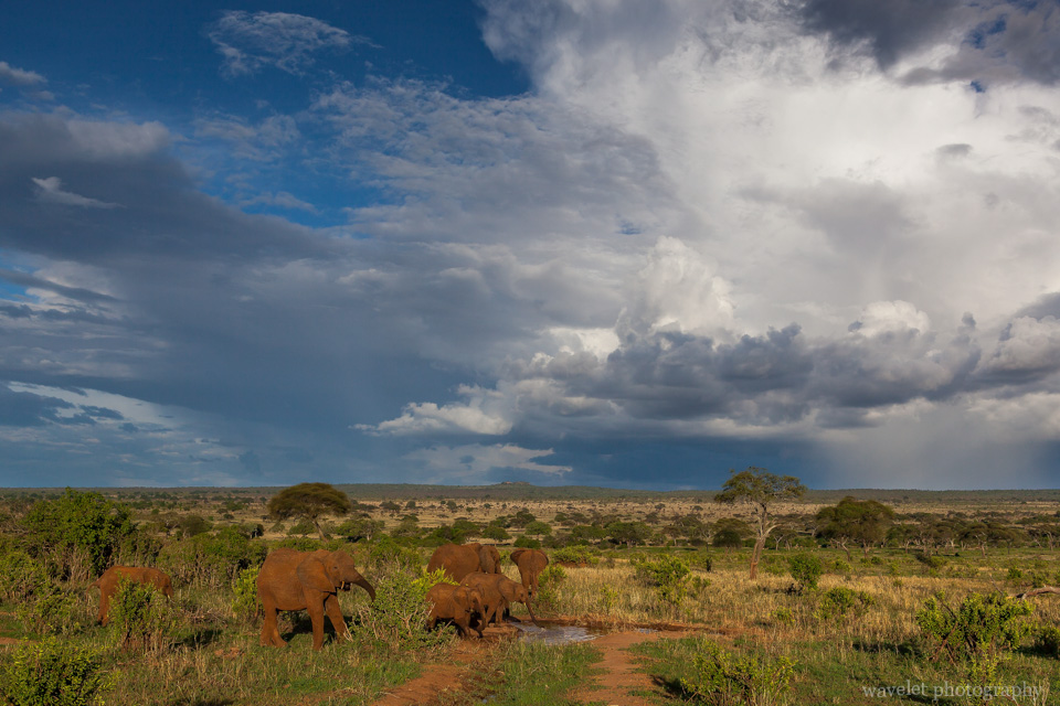 Dramatic clouds and elephants, Tarangire National Park