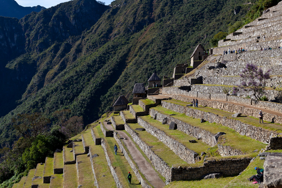 The terraces, Machu Picchu