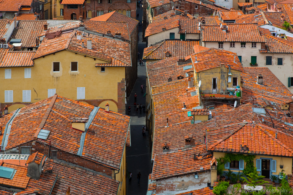 Overlook Lucca city from the top of Guinigi Tower