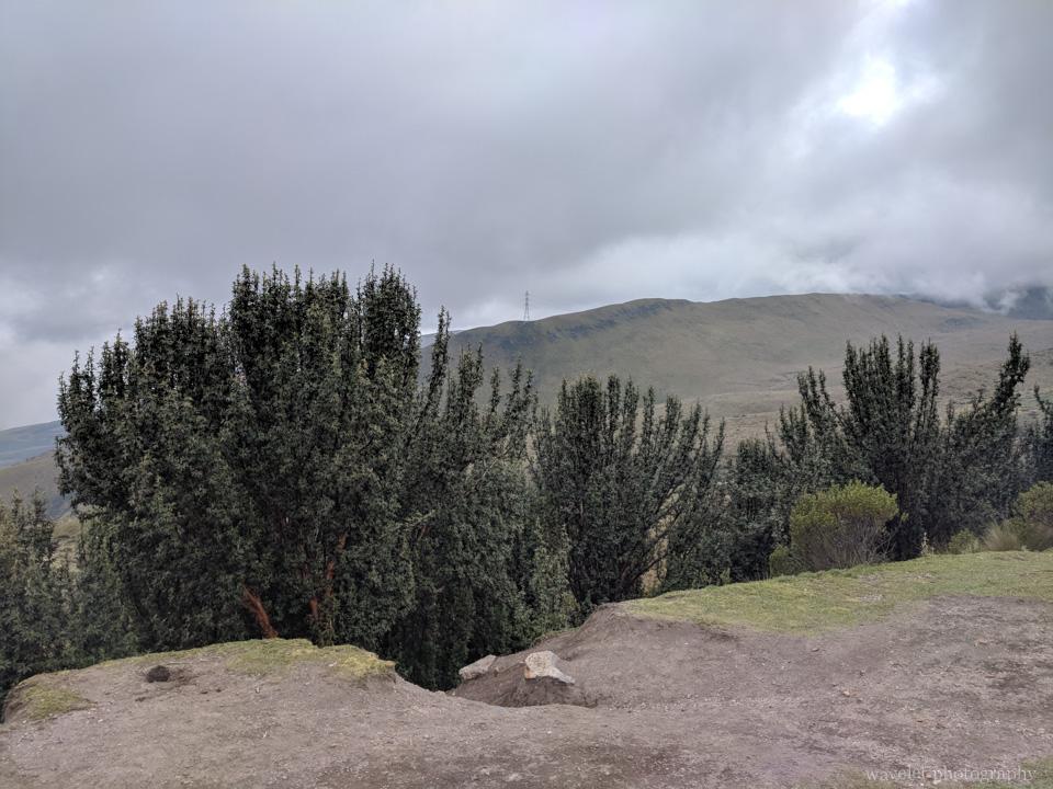 Cruz Loma