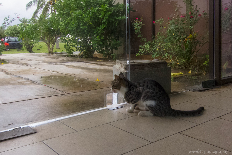 A cat at Moorea Airport