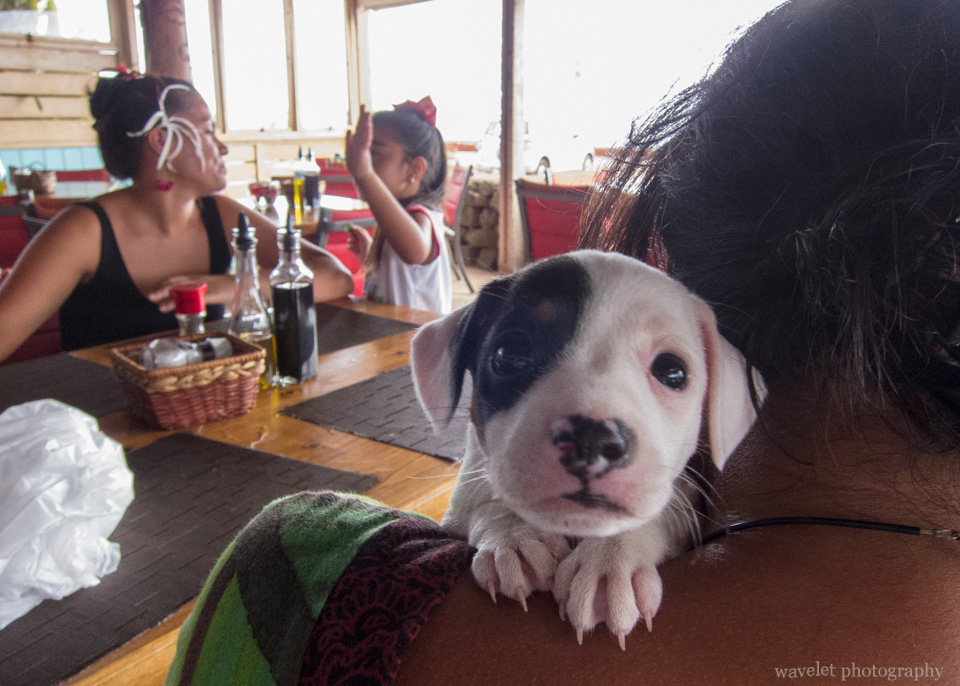 A dog at Restaurant Haka Honu, Easter Island