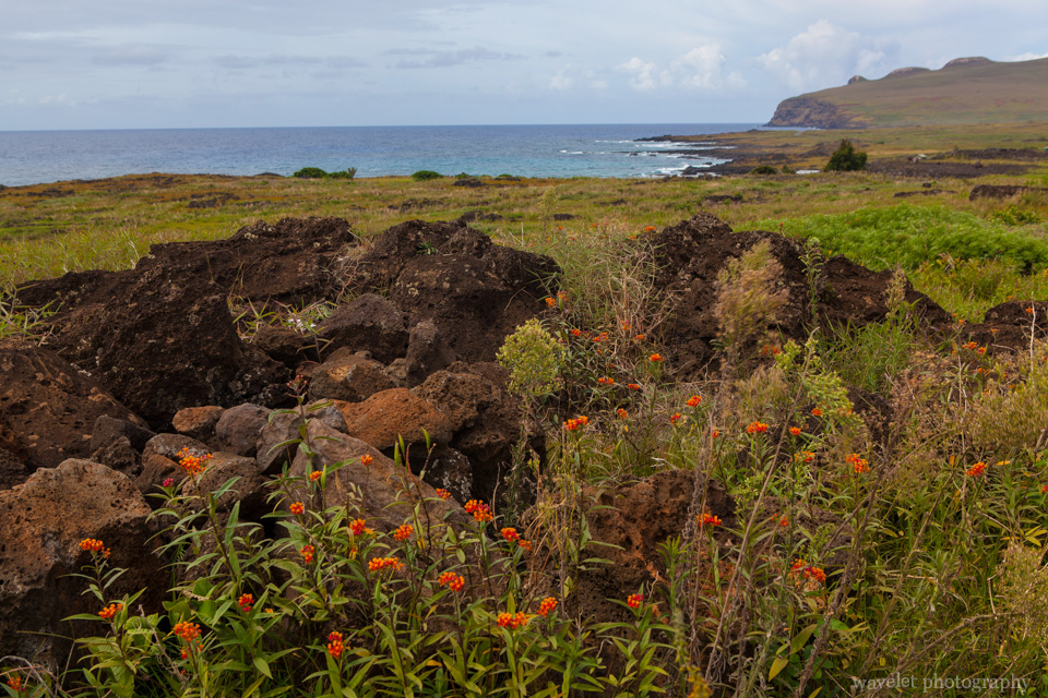 Near Te Pito Kura, the north coast of Easter Island