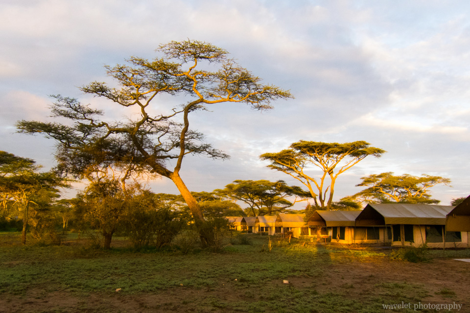 Ang\'ata Migration Camp in sunrise, Lake Ndutu