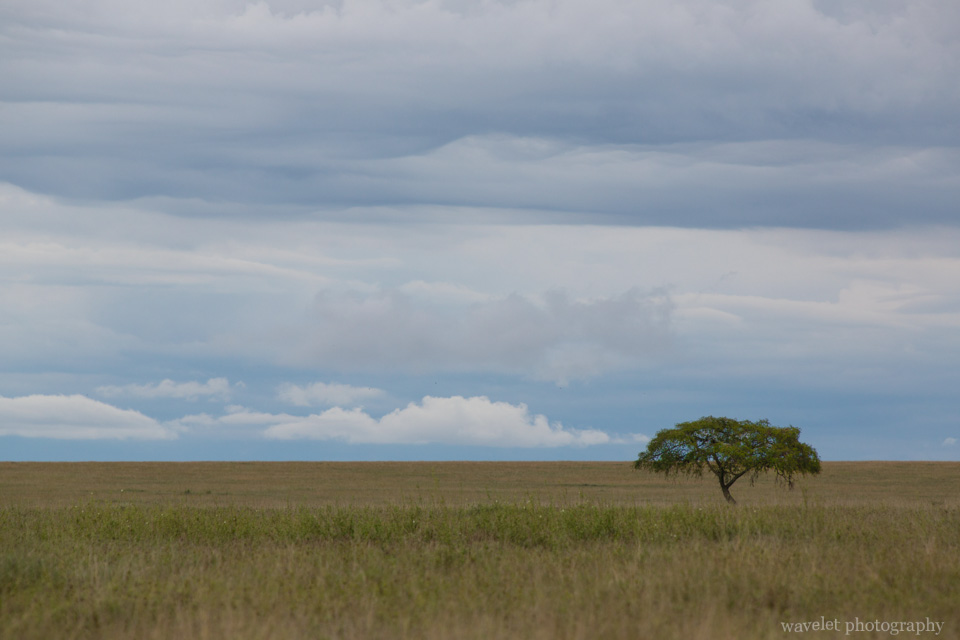 Typical southern Serengeti landscape, Serengeti National Park