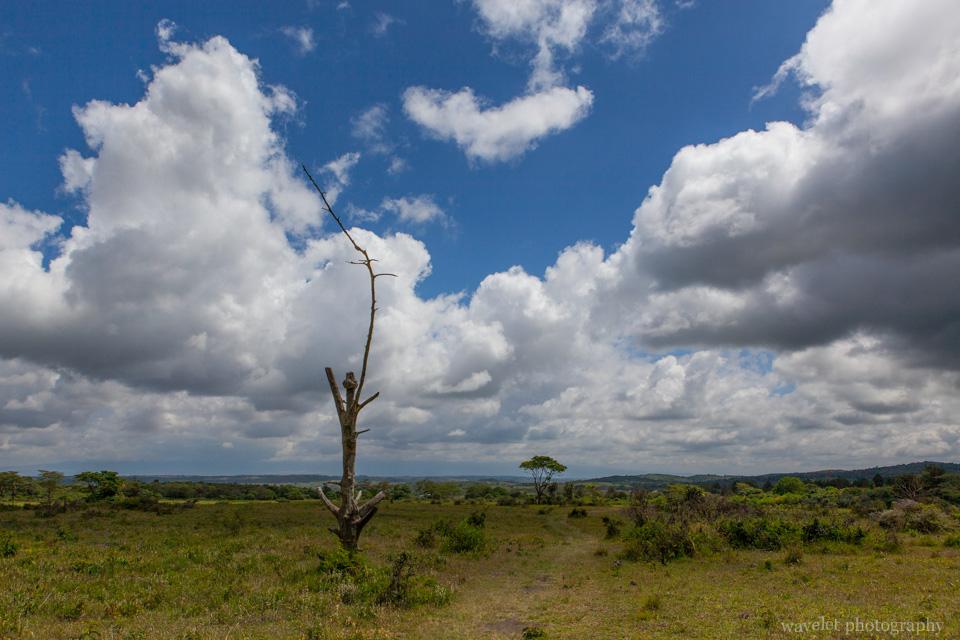 Buffalo Glade, Arusha National Park, Tanzania