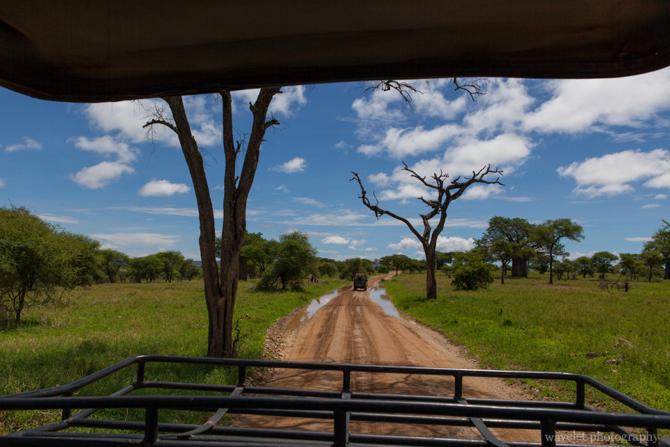 Game drive in Tarangire National Park