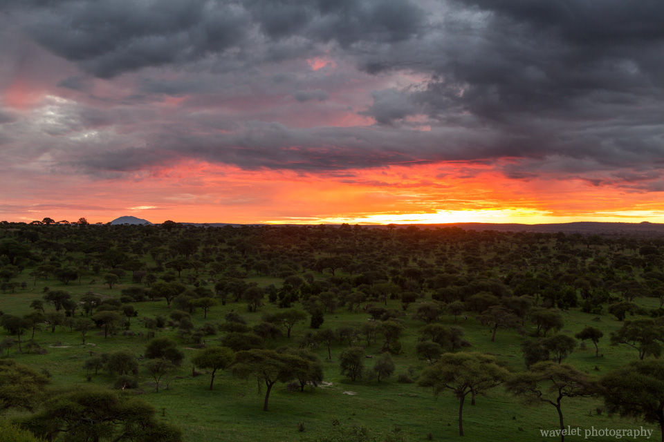 Sunrise in Tarangire National Park