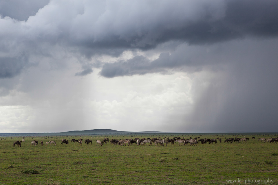 Tunderstorm over Serengeti