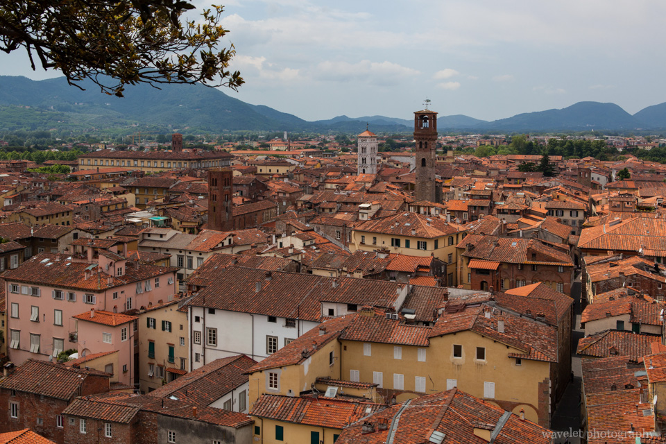 Lucca as seen from the top of the Guinigi tower