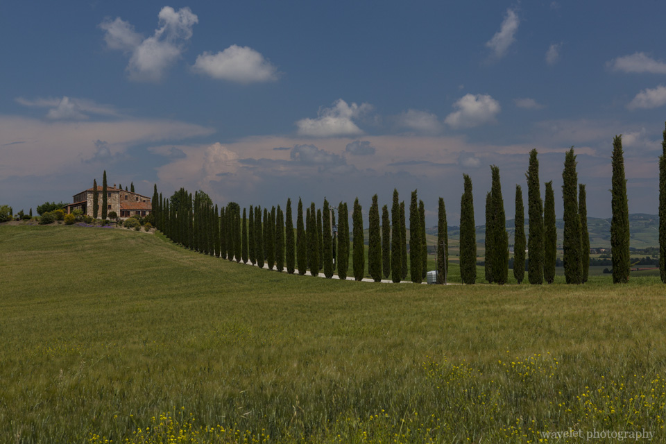Near San Quirico D'orcia, Southern Tuscany