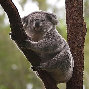Sydney – Taronga Zoo