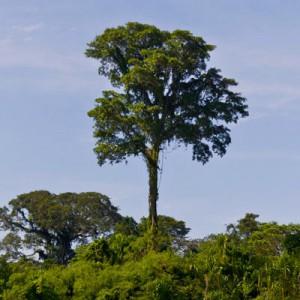 Peru – Tambopata National Reserve