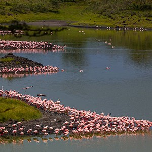 Tanzania – Arusha National Park