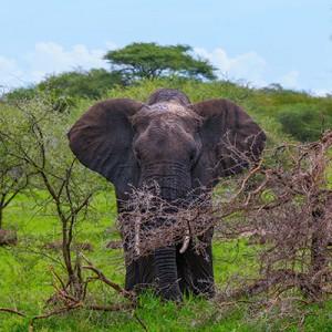 Tanzania – Tarangire National Park