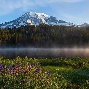 Mt. Rainier – Paradise