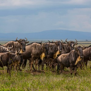 Tanzania – Lake Ndutu and the Migration