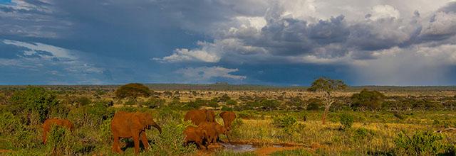 Trip - Tanzania