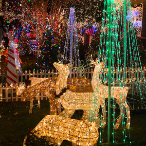 Read more about the article Lights of the Valley