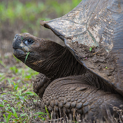 Galápagos – Santa Cruz Island