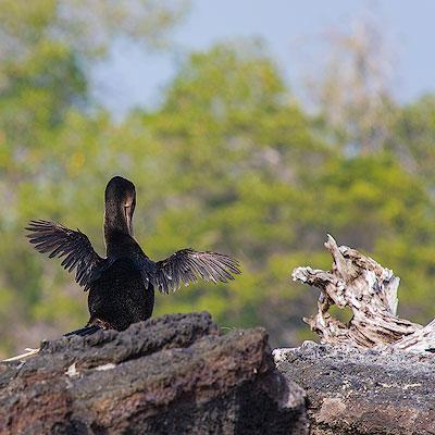 Galápagos – Punta Moreno – Isabela Island