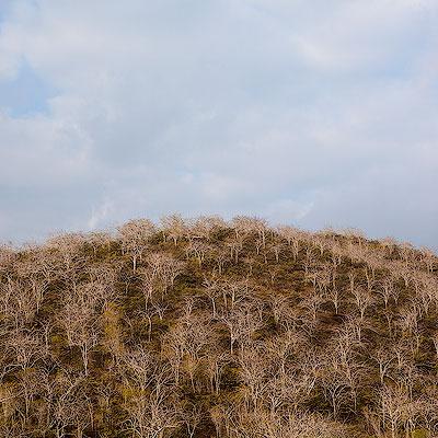 Galápagos – The Pirate Bay